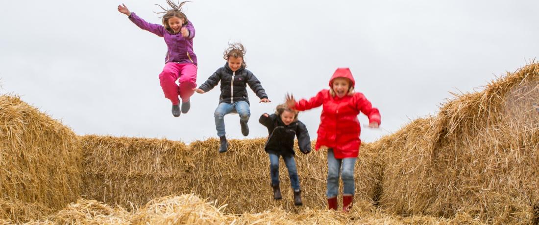 Välkommen till Gotlands skördefestival !